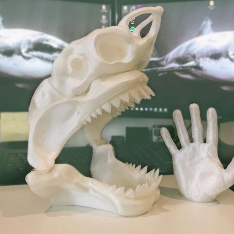 3D printed plastic life size shark skull in south florida office next to 3D printed hand